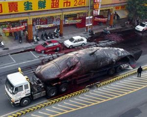 In Taiwan, they hunt whales in the streets